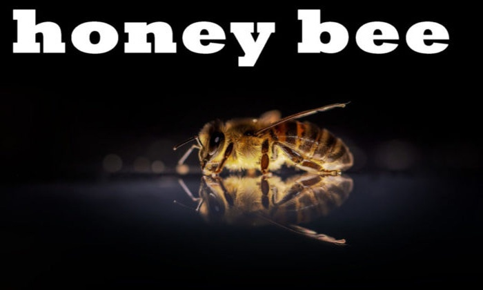 queen-honey-bee